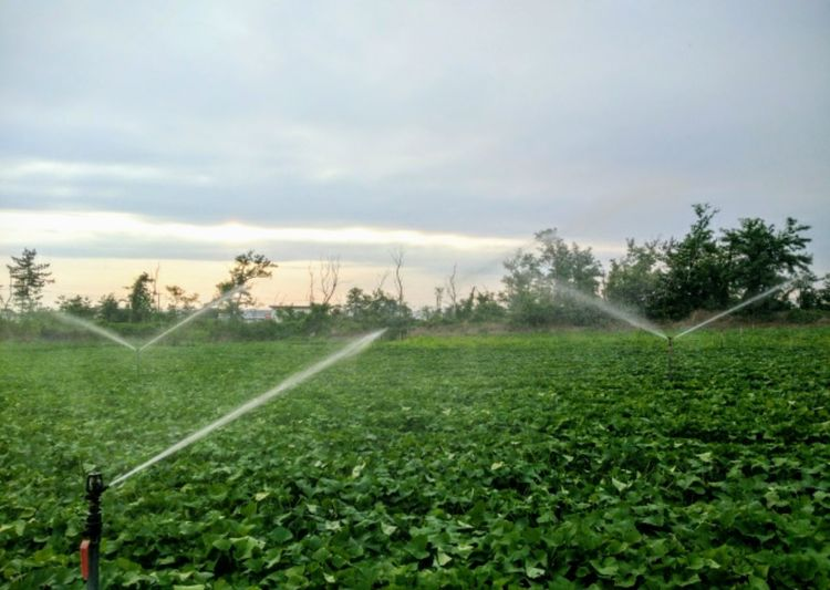 Sprinkler🌟🌈🌱 Agriculture Field Rural Scene Growth Crop  Nature Farm Beauty In Nature Tree Green Color Spraying Outdoors No People Day Cultivated Landscape Scenics Grass Irrigation Equipment Freshness 🇯🇵 Japan Plant Summer Memories 🌄 Sprinkler System Everyday Joy