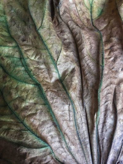 Dried Leaf Dry Leaf Leaf Leaves Full Frame Backgrounds Pattern Textile Indoors  No People Crumpled Close-up Textured  High Angle View Wrinkled Furniture Bed Day Bedroom Sheet Softness Blanket Still Life Linen