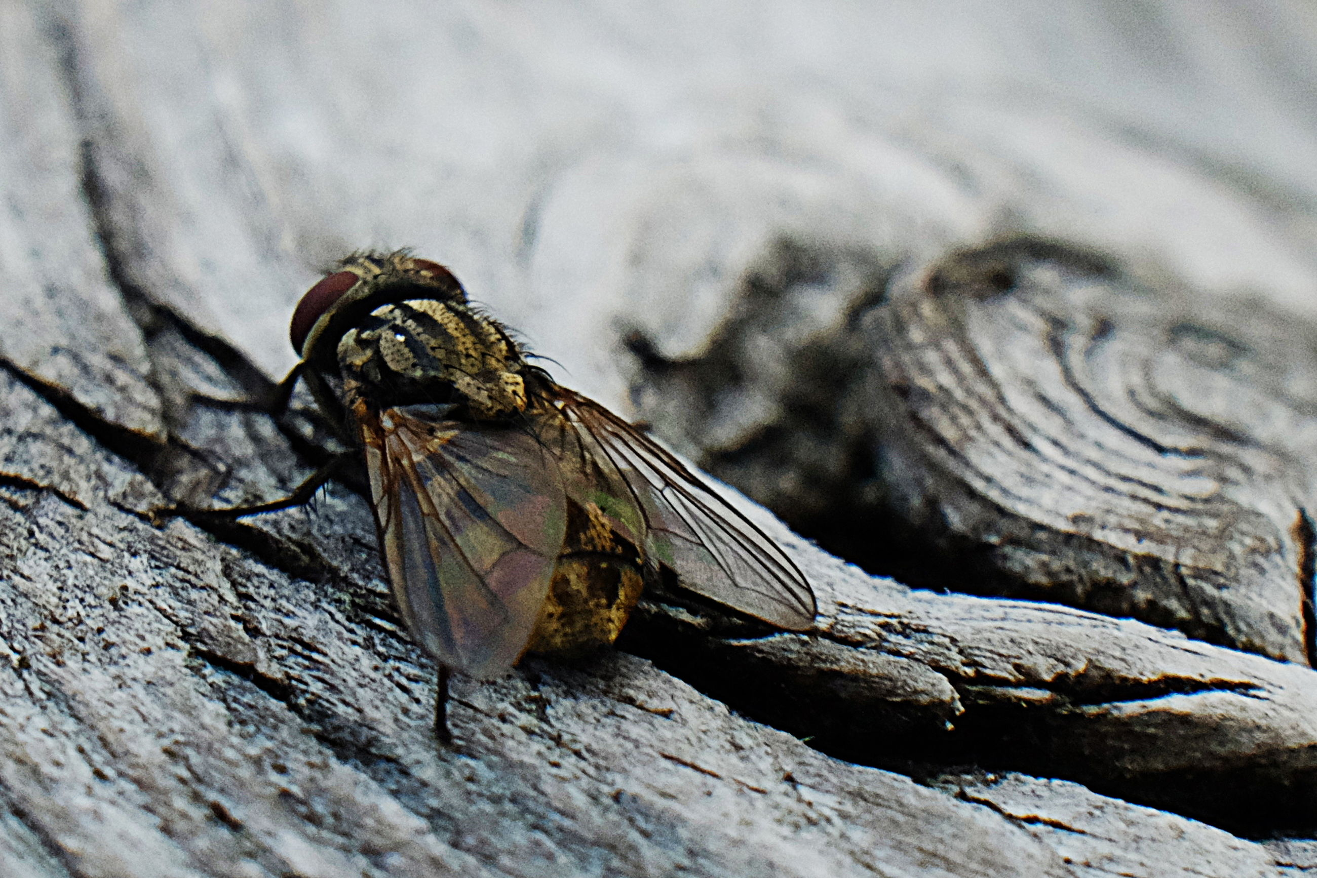 one animal, animal themes, animals in the wild, animal wildlife, animal, wood - material, close-up, no people, day, invertebrate, focus on foreground, insect, nature, selective focus, textured, log, outdoors, tree, wood, timber