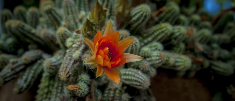 pitres Alpujarra Alpujarra Granada Alpujarras Beauty In Nature Botany Flower Growth Pitres
