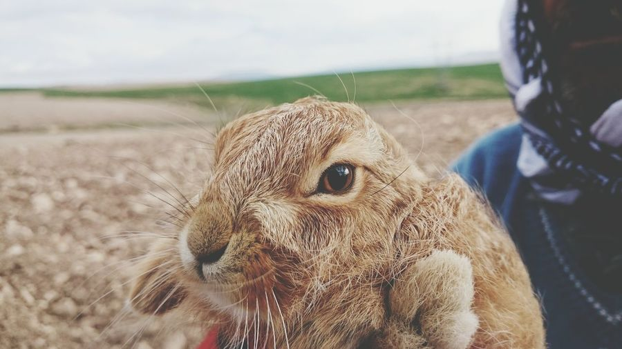 Close-Up Of Person Carrying Rabbit