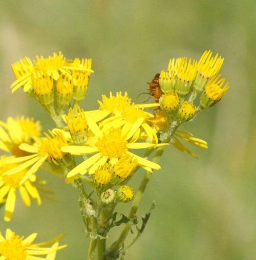 Flowers,Plants & Garden Flowers, Nature And Beauty Flower Photography Flower Yellow Flowers Bug Necture Closeupshot