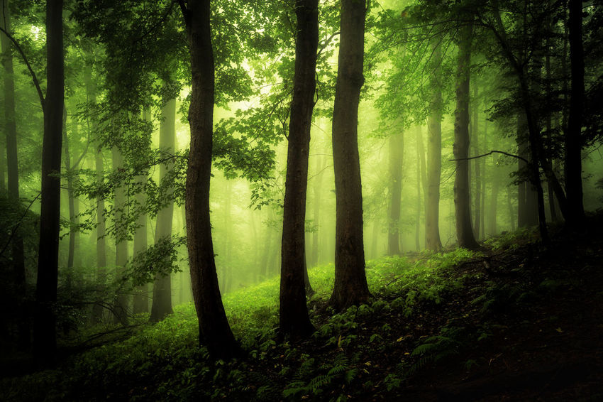 Mystic three Beauty In Nature Branch Day Fog Forest Harz Landscape Mystery Nature No People Outdoors Plant Scenics Spooky Tranquil Scene Tranquility Tree Tree Trunk Wald Waldlandschaft WoodLand
