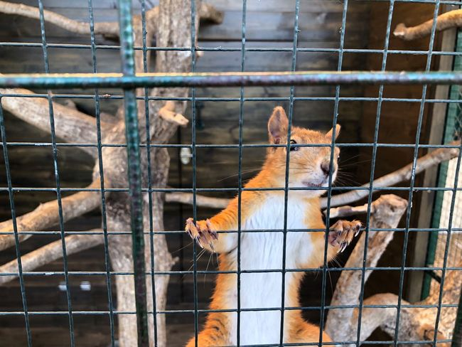 EyeEm Selects Animal Themes Mammal Animal Cage Animals In Captivity Fence Outdoors Domestic Trapped Domestic Animals Animal Wildlife Metal No People Pets Day Zoo Barrier Group Of Animals Vertebrate Boundary