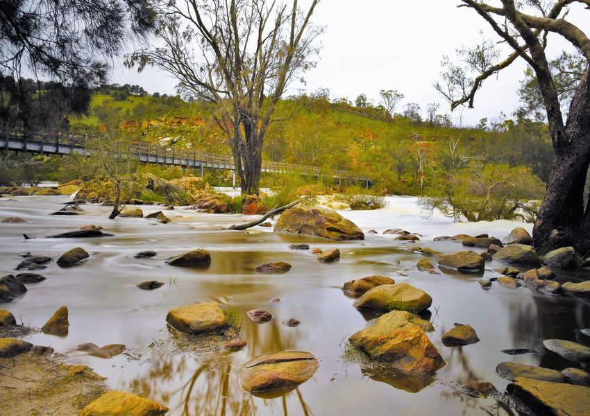 River flow Tranquil Scene Tranquility Tree Water River Calm Beauty In Nature Stone Flowing Taking Photos Enjoying Life Relaxing
