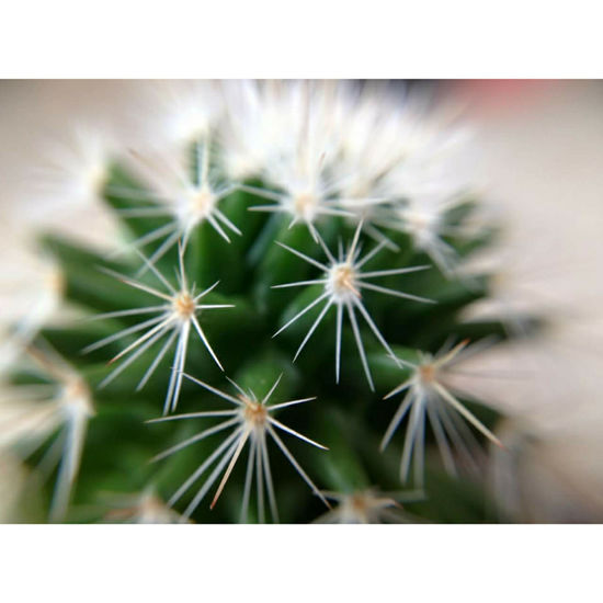 🌵 Growth Flower Plant Green Color Nature Close-up Uncultivated Springtime Outdoors Day No People Fragility Beauty In Nature Freshness Flower Head