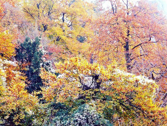 Autumn Colors Nature On Your Doorstep Symonds Yat River Side Walk