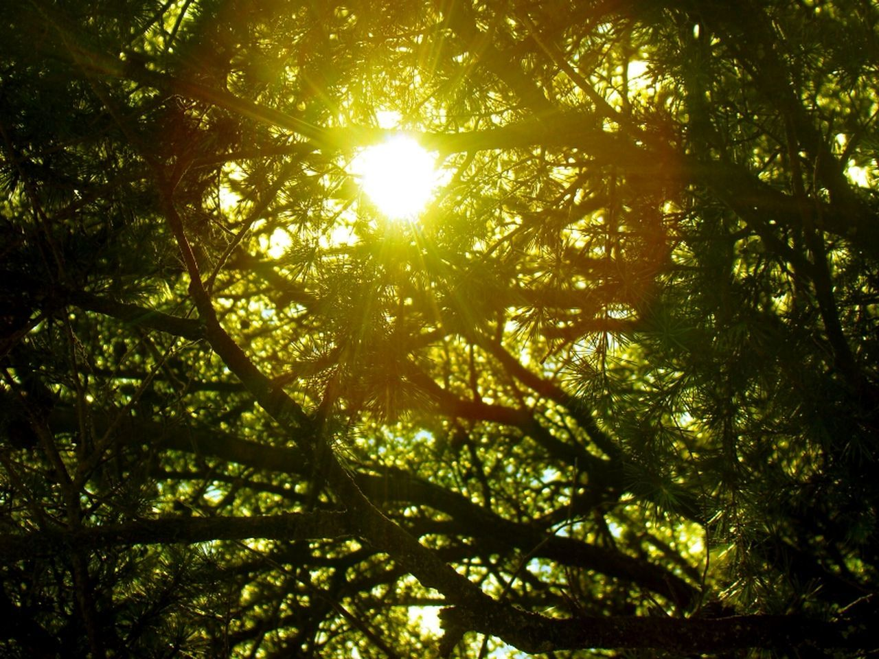 tree, nature, sunlight, sunbeam, low angle view, growth, sun, beauty in nature, day, outdoors, branch, forest, no people