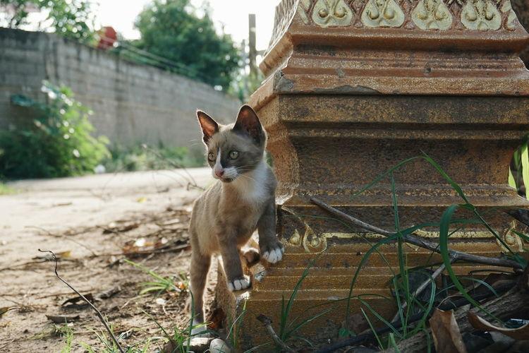 Cats Of EyeEm Cat♡ Animal Animals Thailand