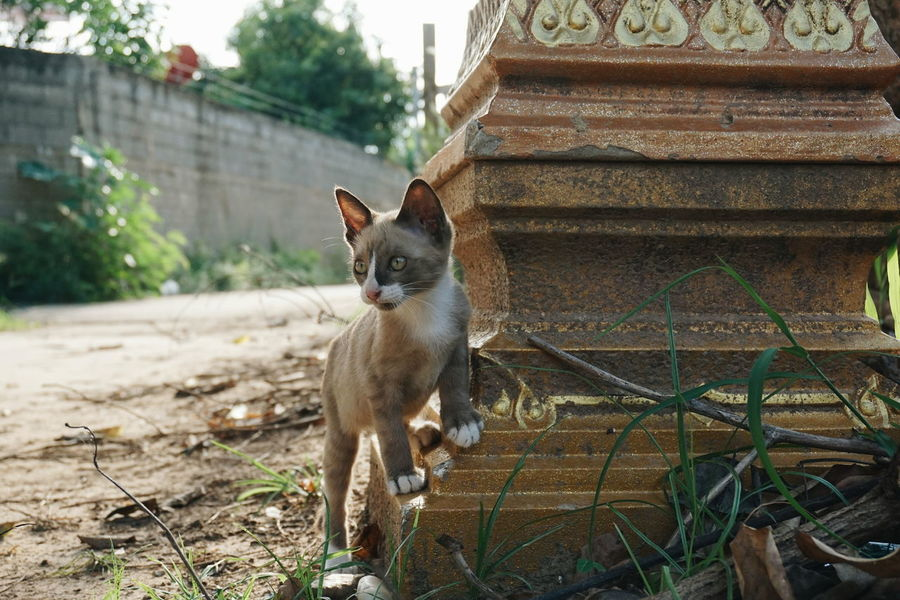 Cats Of EyeEm Cat♡ Animal Animals Thailand