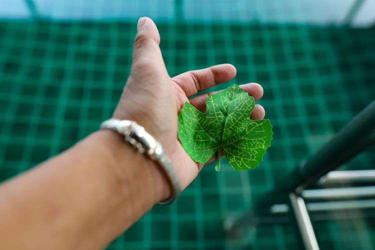 Close-up of hand holding leaves in swimming pool