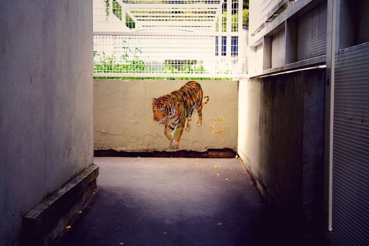Tiger Urban Art