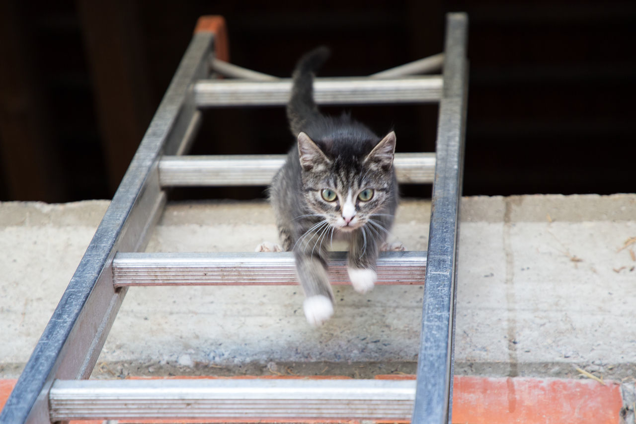 domestic cat, domestic animals, feline, pets, animal themes, mammal, one animal, cat, looking at camera, portrait, no people, day, outdoors
