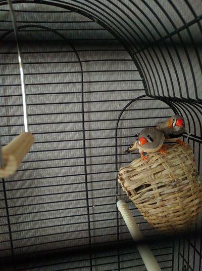 Oiseau Taking