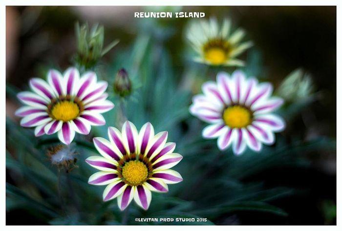 Hanging Out Taking Photos Hello World Enjoying Life Flowers Reunion Island ST DENIS