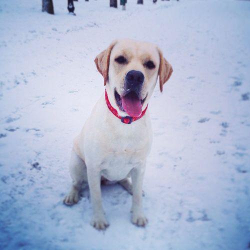 Доброе утро:) хорошая прогулка в снежное утро;)