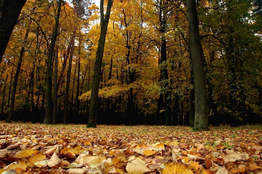 Autumn Autumn Colors Belarus Leafs Soviet Era Soviet Soviet Architecture Travel Destinations