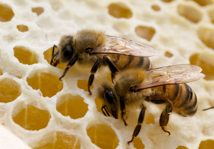 Close-Up Of Bee On Beehive