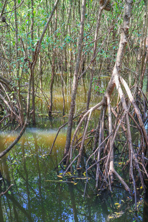 mangrove forest Prop Root Buttress Roots Mangrove Forest Riren Forest Environment Ecology Ecology Forest Forest Environmental Photography Mangrove Roots Mangrove Trees Tree Nature Branch Beauty In Nature Forest Growth Green Color Outdoors Water Day No People
