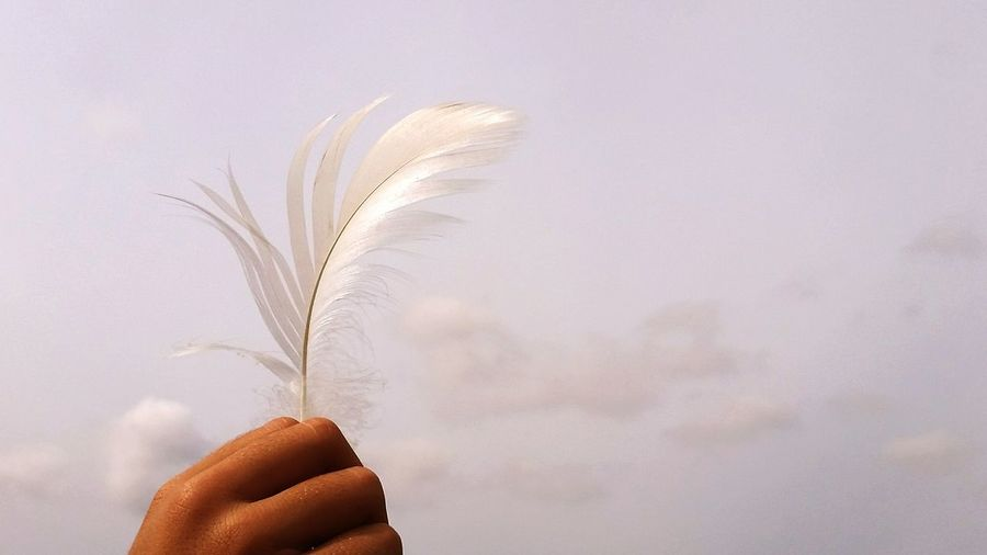 Cropped hand holding feather against sky