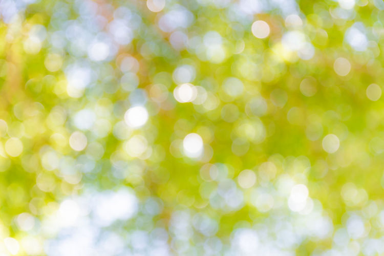 Abstract Abstract Backgrounds Backgrounds Bright Brightly Lit Copy Space Decoration Defocused Full Frame Green Color Light - Natural Phenomenon Nature No People Pattern Shiny Springtime Textured  Textured Effect Vibrant Color White Color