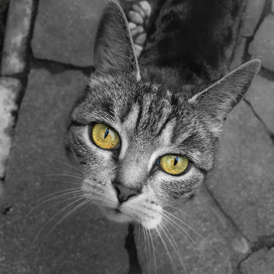 on return, neighbour's cat is guarding the house Animal Themes Close-up Day Domestic Animals Domestic Cat Feline Looking At Camera Mammal No People One Animal Outdoors Pets Portrait Whisker