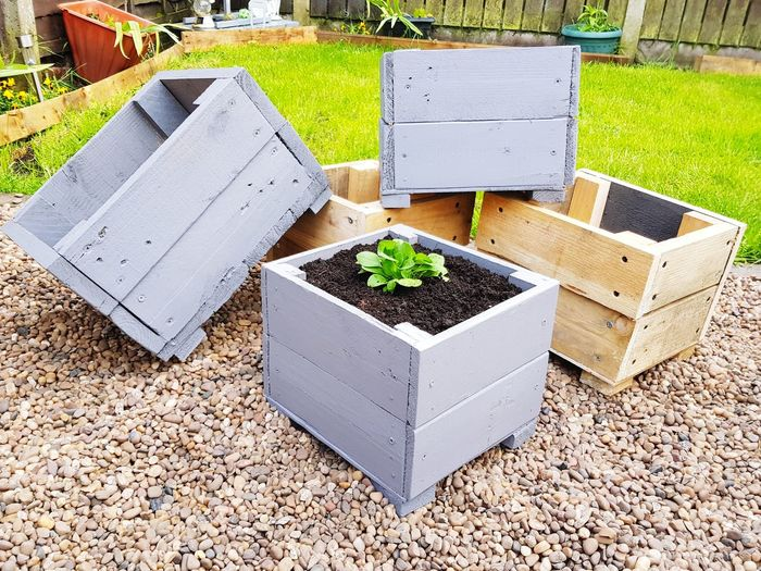 offcuts Handmade With Offcuts Recycled Planter Gret Box By Me Love What I Do My Job Hobby Craft Wood High Angle View Close-up Plant Young Plant Ground Dirt Growing Potted Plant Seedling