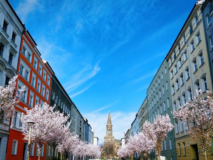 Church Berlin Berliner Ansichten Cherry Blossom Sakura Blossom Sakura Spring Springtime Copy Space Tranquility The Way Forward vanishing point Street City Cityscape Tourist Attraction  Tourism Travel Destinations City Sky Architecture Building Exterior Urban Scene Blossom Cherry Tree In Bloom Pollen