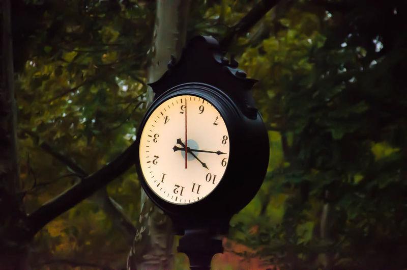 Clock on tree at night