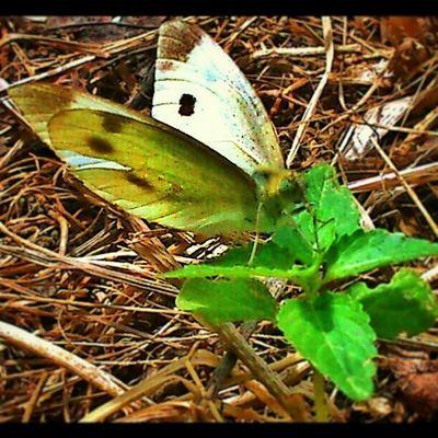 Photo Best  Photofday Instalike instamood instacollage instacool instagood instalife visco vscocam life like4like like4spam life butterfly follow me yaz