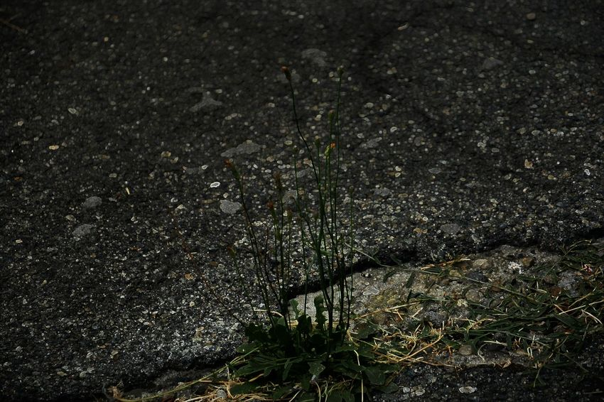 Asphaltography Beauty In Nature Darkness Day Fragility Full Frame Growth Nature No People Non-urban Scene Outdoors Scenics Tranquil Scene Tranquility