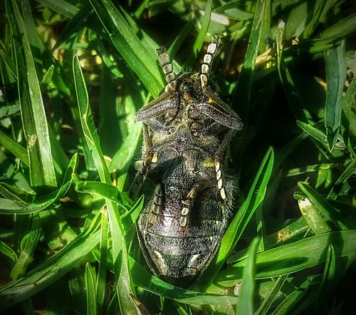 Taking Photos Check This Out Faking Sleep Defender Showcase May My Favorite Photo The Week On Eyem Bugs Animals EyeEm Best Shots My Own Style Of Beauty Thinks I Like Showing Imperfection Nature Photography Popular Photos Pretending