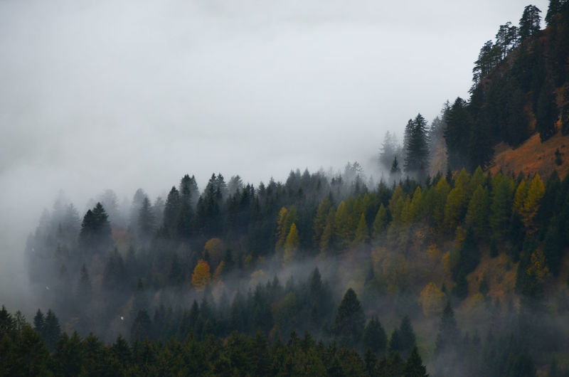 Panoramic view of forest against sky