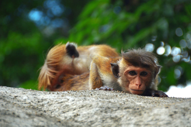 Animal Themes Animal Wildlife Animals In The Wild Close-up Day Infant Japanese Macaque Mammal Monkey Nature Outdoors Togetherness Young Animal