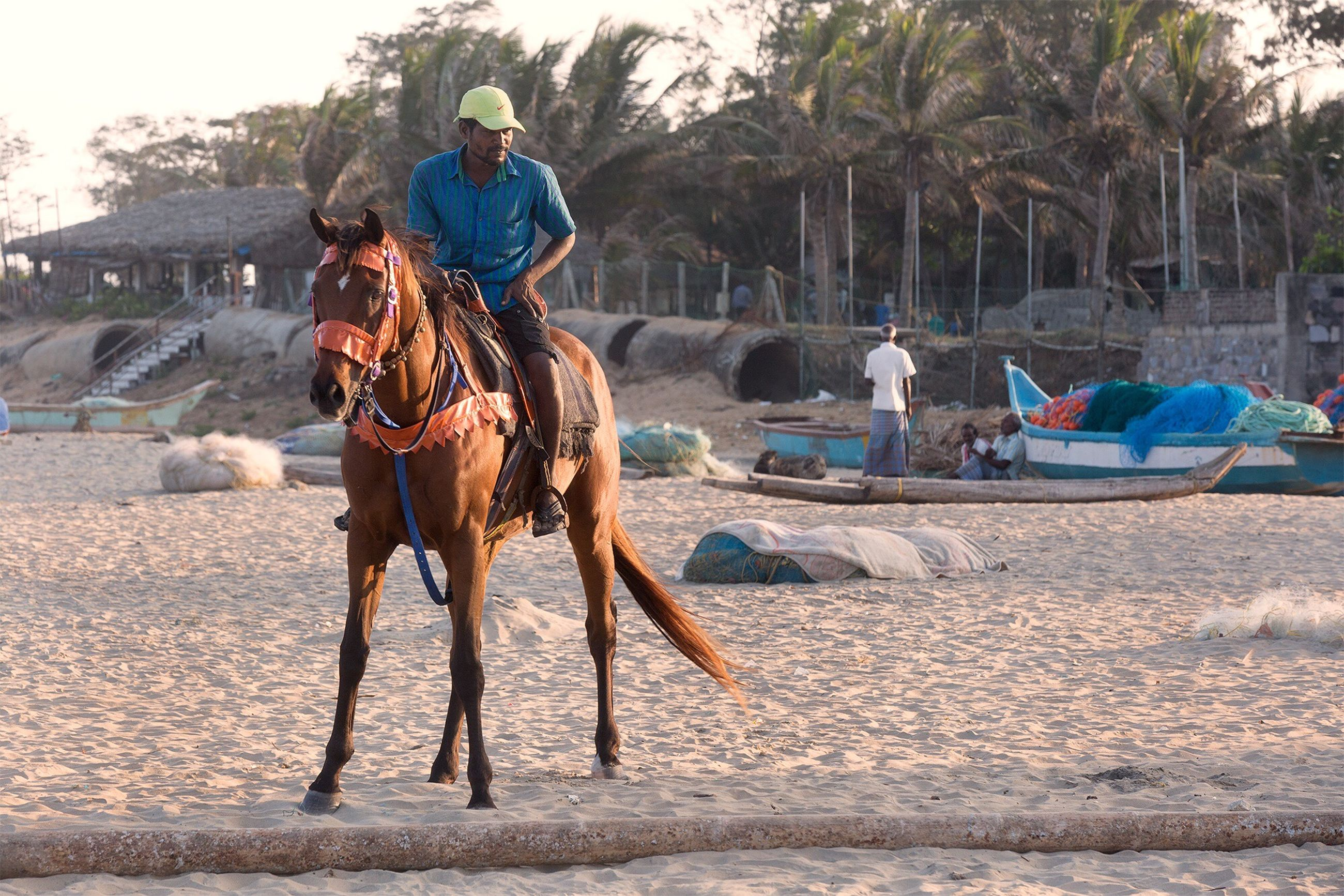 lifestyles, leisure activity, full length, beach, casual clothing, water, tree, sand, men, building exterior, sunlight, incidental people, palm tree, sky, horse, day, outdoors, standing