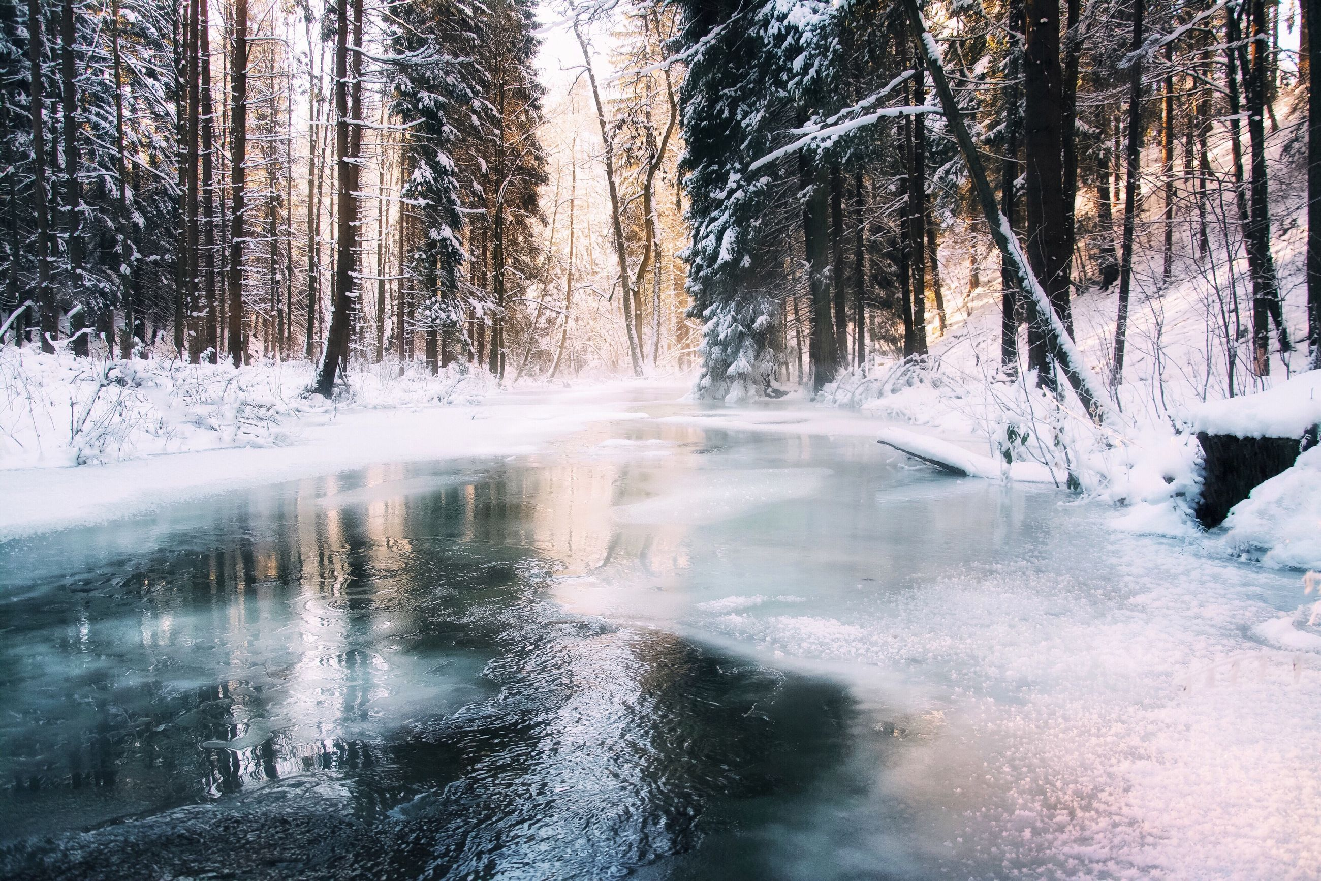 tree, nature, day, water, no people, tranquility, beauty in nature, outdoors, winter