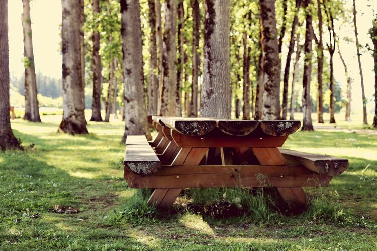 Picnic table at Evergreen Chapel Picnic Table Park Vintage Flower Tree Trunk Growing Bark Woods Park - Man Made Space Grass Area Branch Moss