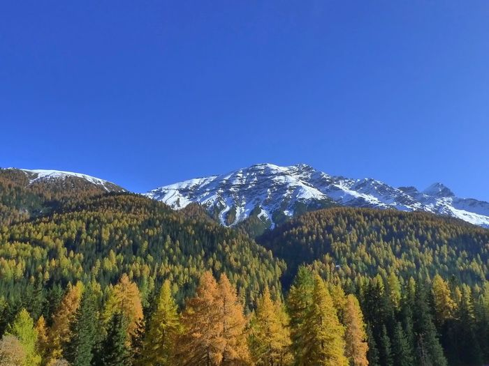 View of trees on mountain against blue sky