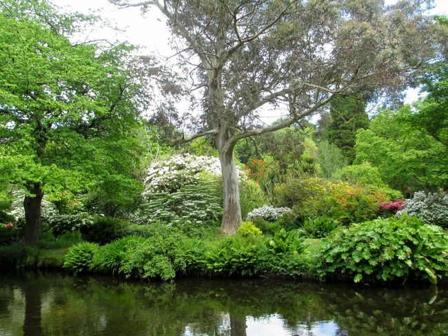 Beauty In Nature Day Green Color Ireland Mount Usher Gardens Nature Outdoors Park Tranquility Tree