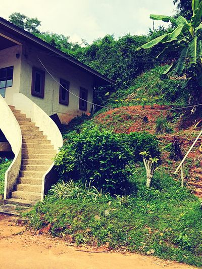 Vintage Home On City Of Thailand Architecture Built Structure Tree Building Exterior Outdoors Day Growth Plant No People Nature Sky