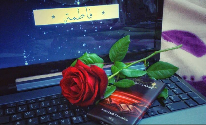 Fátima That's My Name Red Rose Flower Rosé Rose🌹 By Me فاطمة تصويري  اسمي 🌹💐