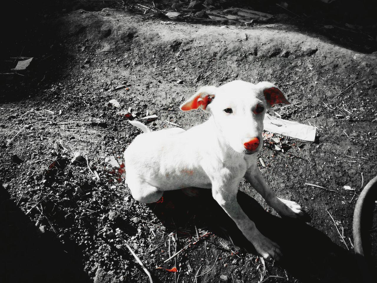 HIGH ANGLE PORTRAIT OF DOG ON FIELD DURING RAINY SEASON