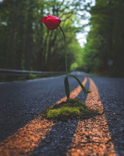 Normality is a paved road: It's comfortable to walk, but no flowers grow on it. Vincent Van Gogh Art Travel Destinations Travel Taking Photos Exploring Upperleftusa Washington Road Quotes Nature Flower PNWonderland PNW First Eyeem Photo