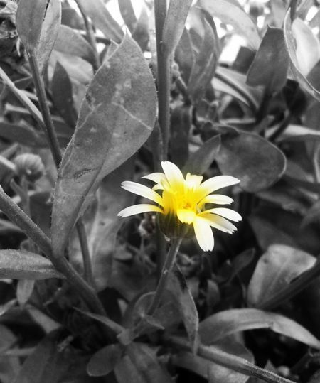 Black And White And Color Creativity No People