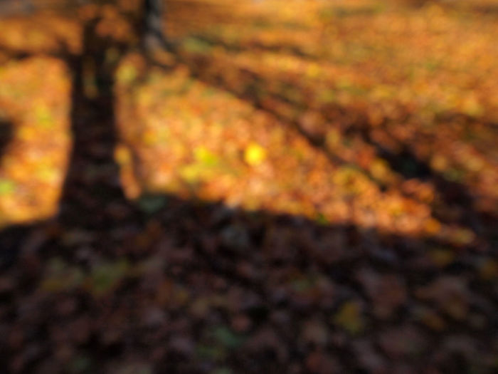 Autumn Autumn Backgrounds Beauty In Nature Berlin Close-up Day Defocused Fine Art Photography Full Frame Leaf Leafs Nature No People Outdoors Wolskartin