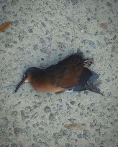 Glitch Accidentshappen Bird Meets Glass With Unsurprising Results EyeEm Birds Birds In Flight Dead Bird