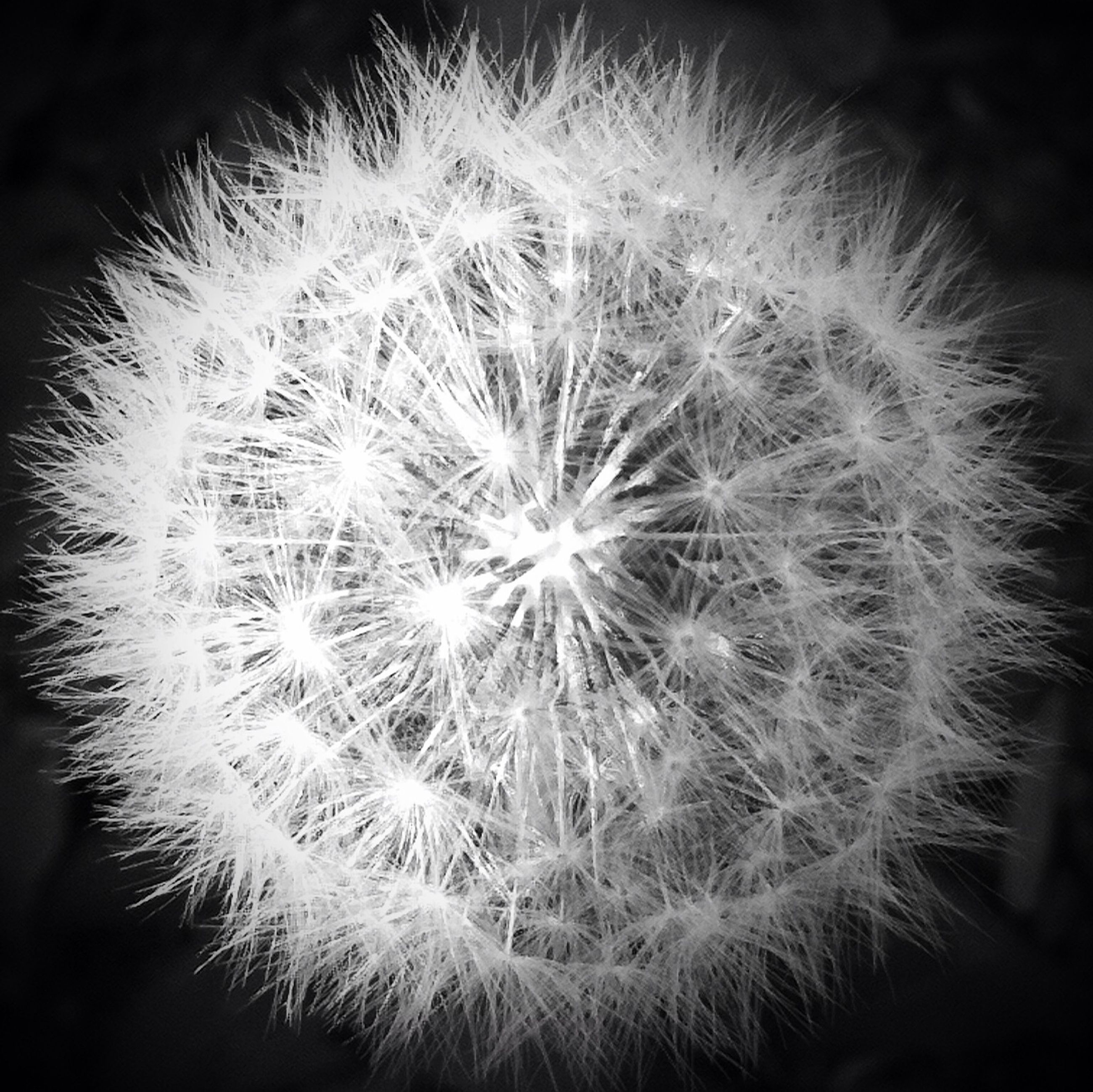 flower, dandelion, flower head, fragility, freshness, growth, close-up, beauty in nature, single flower, nature, softness, petal, in bloom, focus on foreground, plant, white color, botany, selective focus, blossom, uncultivated