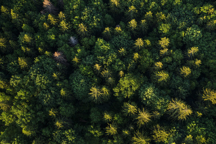 High angle view of flowering trees in forest