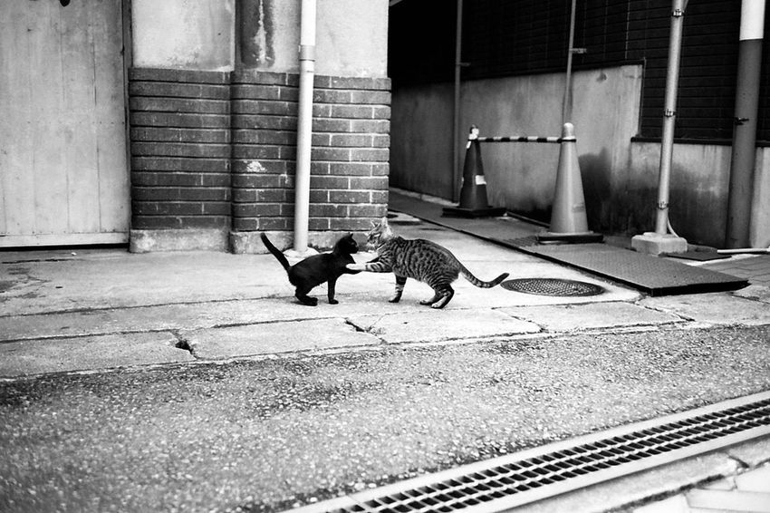 Darkness And Light Open Edit Stray Cat Hight Touchi Leicam3 RolleiSonnarHFT 40mm