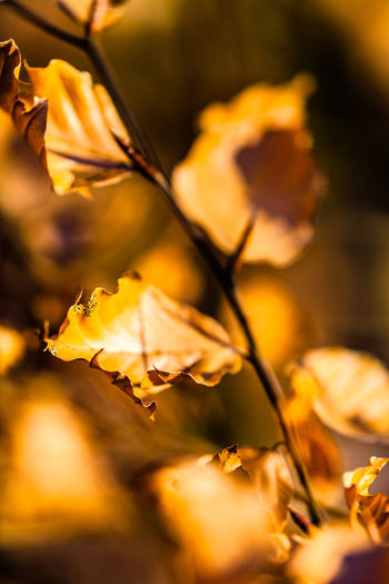 Close-Up Of Yellow Flowers During Autumn